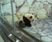 パンダ好き