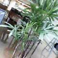 気になる植物